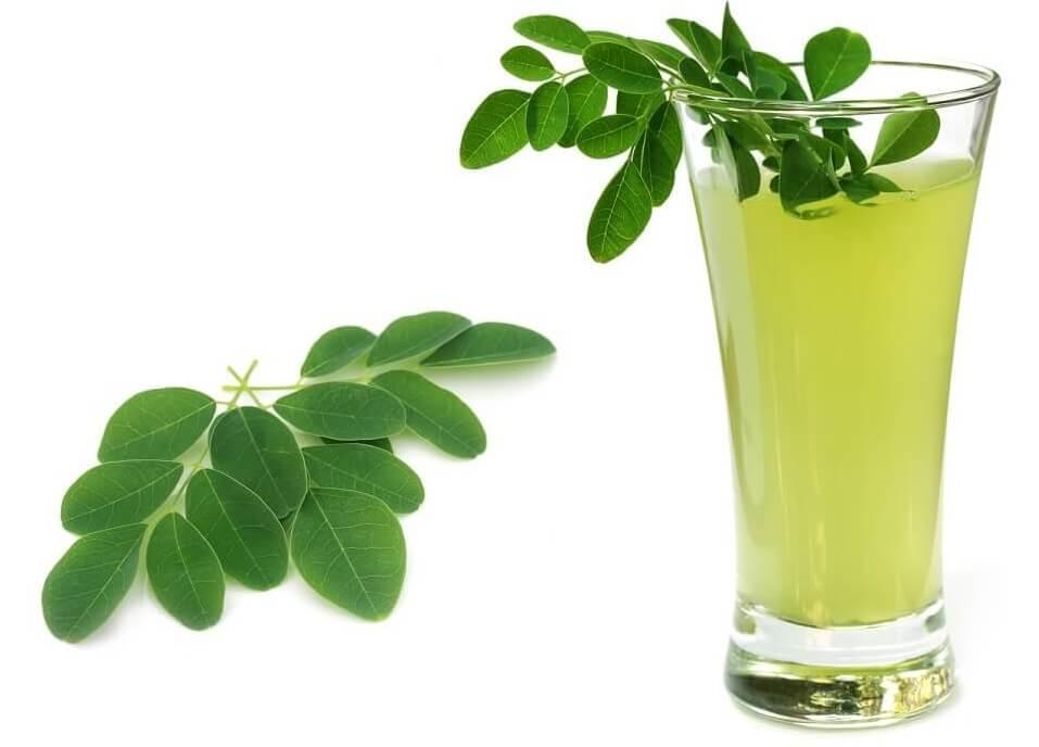 Moringa Tee - Wissenswertes über den grünen Wundertee